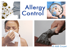 Allergy Control - Beverly Square West 11226