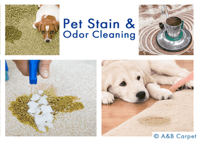 Pet Stain and Odor Removal - Clinton Hill 11205