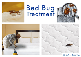 Bed Bug Treatment - Beverly Square West 11226